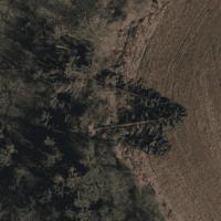 NADIR-Aufnahme zweier gefallener Bäume