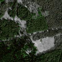 Individuelle Bäume mit Höhen auf Orthofoto